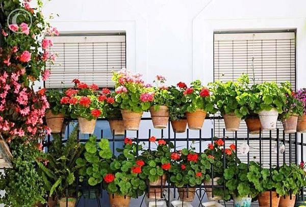 Красивый балкон цветы 48