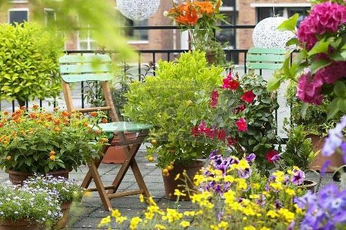 балконы в цветах, цветы на балконе, красивые балконы, красивые интерьеры, фотографии красивых интерьеров