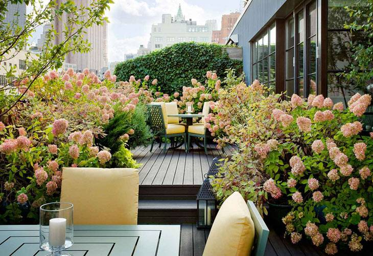 сады на крышах фото