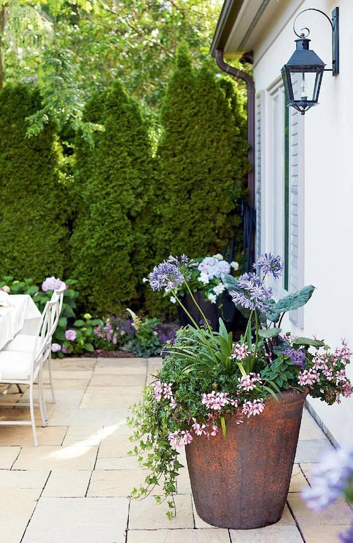 озеленение внутреннего двора фото