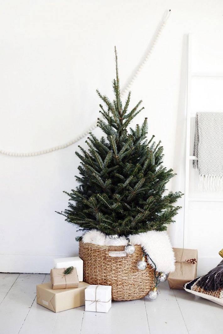 настоящая маленькая новогодняя елка в кадке фото
