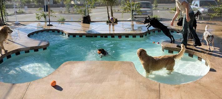 собак в виде кости для купания собак