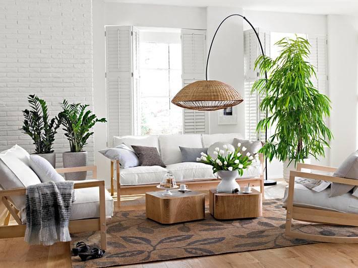 комнатные растения в горшках приносят пользу человеку