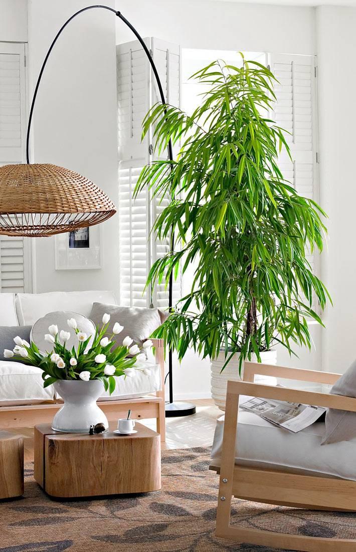 большое дерево в белой кадке посредине интерьера гостиной