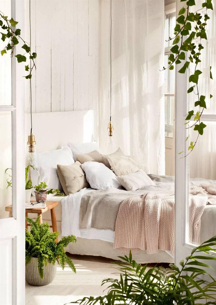 зеленые цветы в спальне очищают воздух и сохраняют влажность