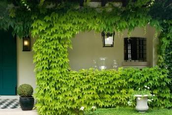 двор с зеленью