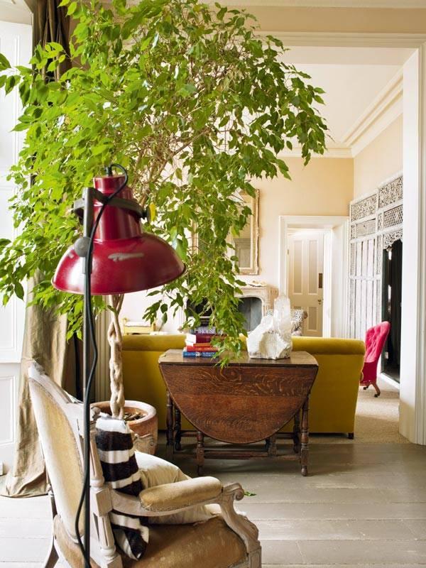 шикарное дерево фикус бенджамина в квартире фото