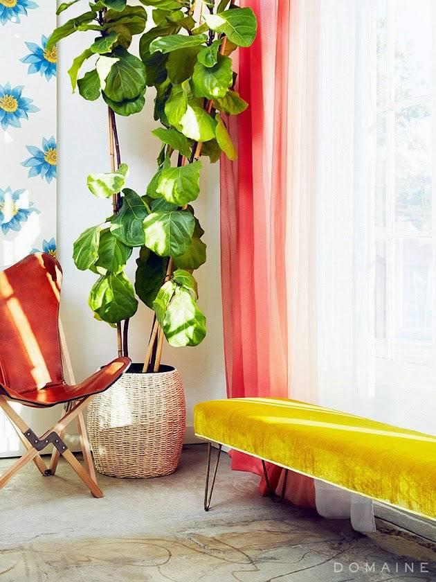 большой комнатный цветок разбавляет светлый интерьер студии