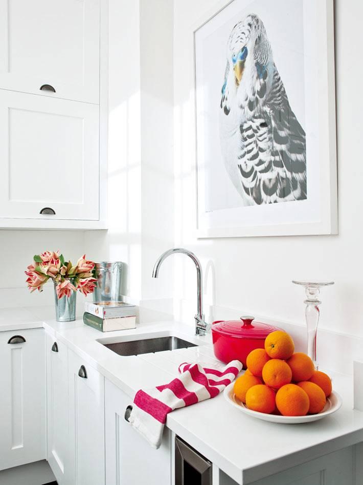 картина с попугаем в интерьере кухни фото