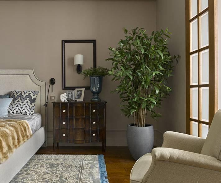 комнатное растение-дерево в интерьере спальни