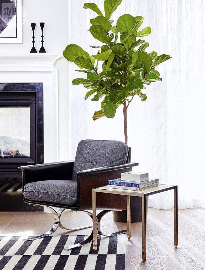 фикус лират - комнатное растение-дерево в интерьере дома