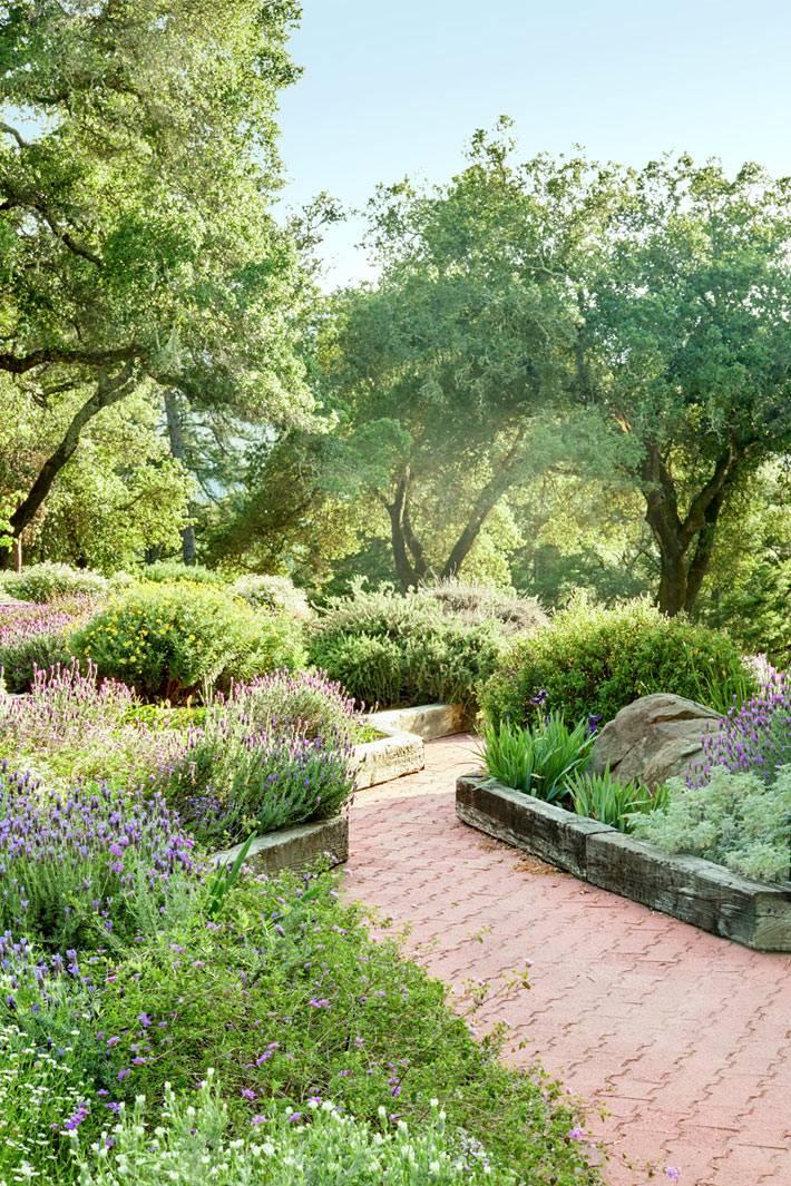 красивый сад возле дома в Калифорнии