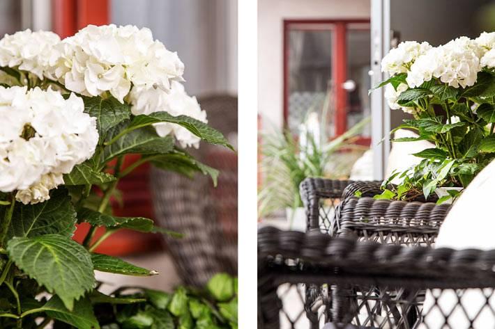 гортензии и другие цветы на уютном балконе фото