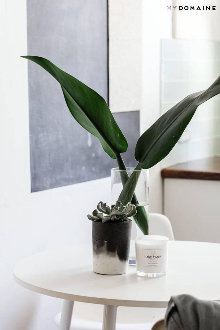 зеленые растения в интерьере белого цвета