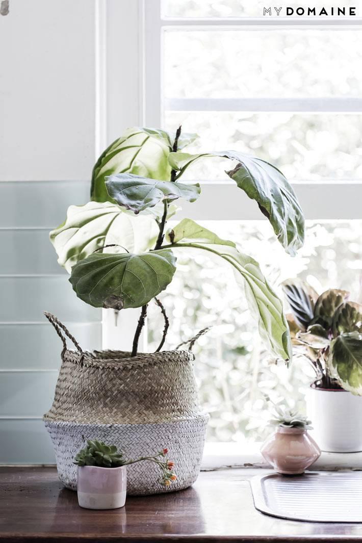 комнатный цветок в плетеном вазоне на окне