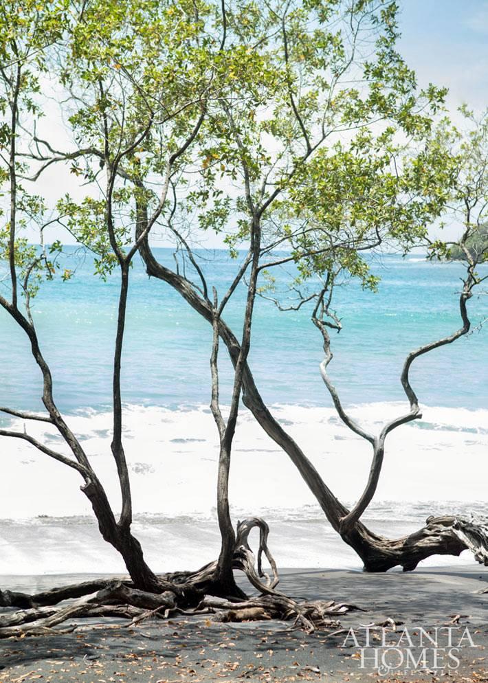 деревья возле моря - отличный пейзаж