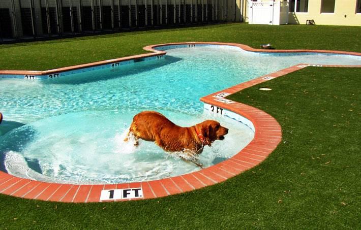собачий бассейн-кость на заднем дворе