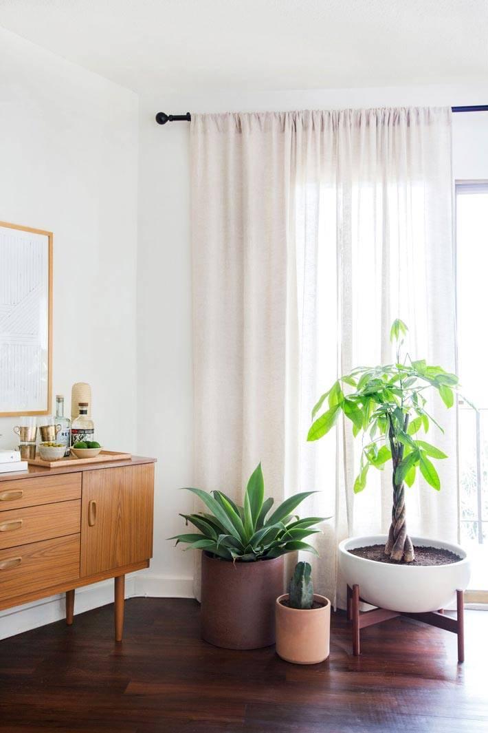 Комнатные растения в различных красивых горшках