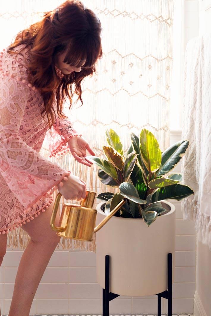 комнатное растение в горшке в интерьере ванной фото