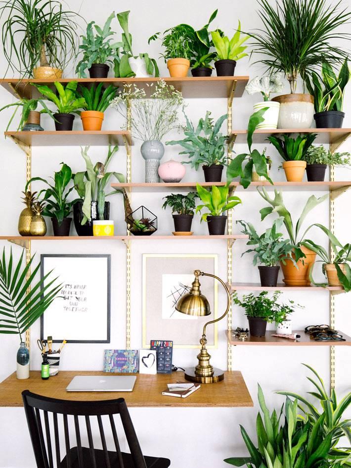 полка с комнатными растениями над рабочим столом в доме