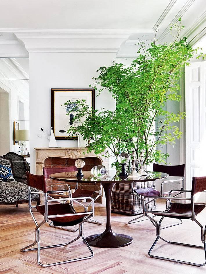 комнатный цветок в плетеной квадратной корзине фото