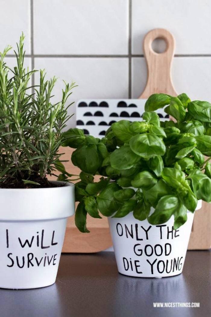 как выращивать свежую зелень с цветочных горшках на кухне