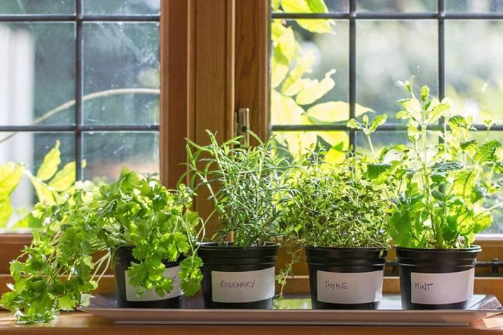 как и какие выращивать полезные травы на кухонном подоконникие