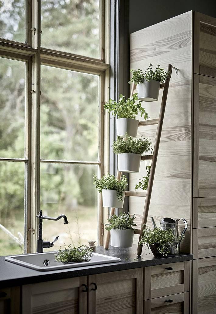 подставка-лестница для организации вазонов с зелеными травками фото