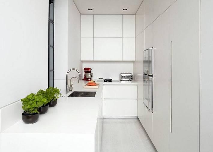 зелень на кухне не только полезна, но и может служить декоративным элементом