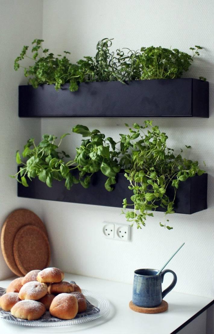 черные ящики подвесили на стену для маленького домашнего огорода