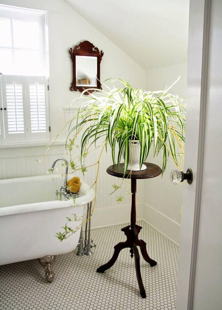 зеленый комнатный цветок на подставке для украшения комнаты