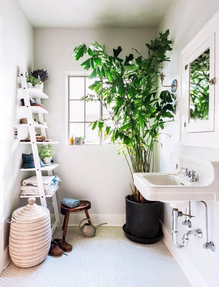 большое растение до потолка в черной кадке в дизайне ванной