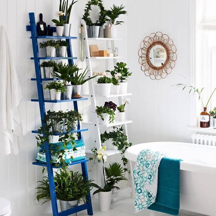 пристеночные полки-стремянки длч больших и маленьких комнатных растений