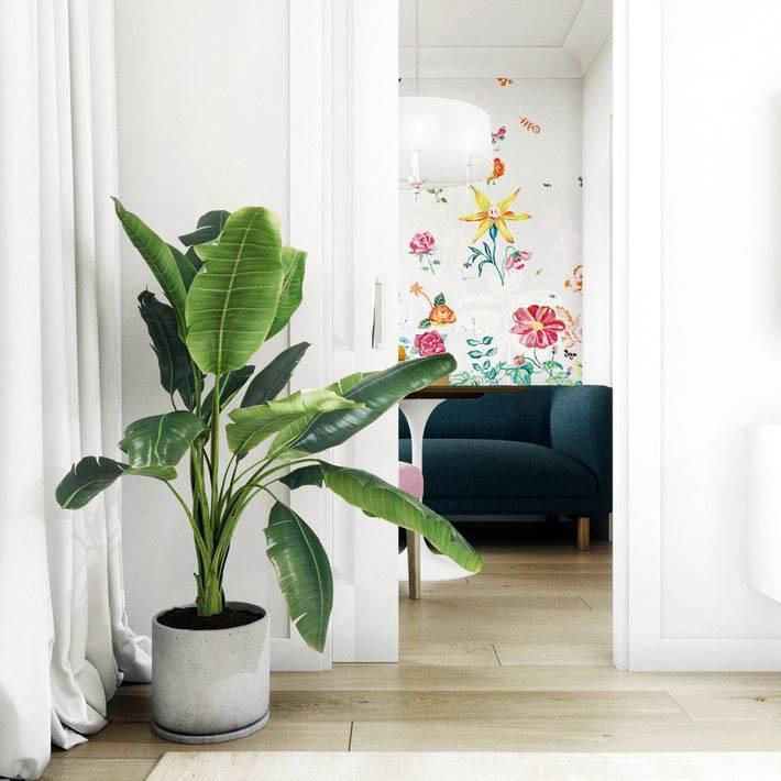 живіе растения в кадках и вазонах на полу в квартире