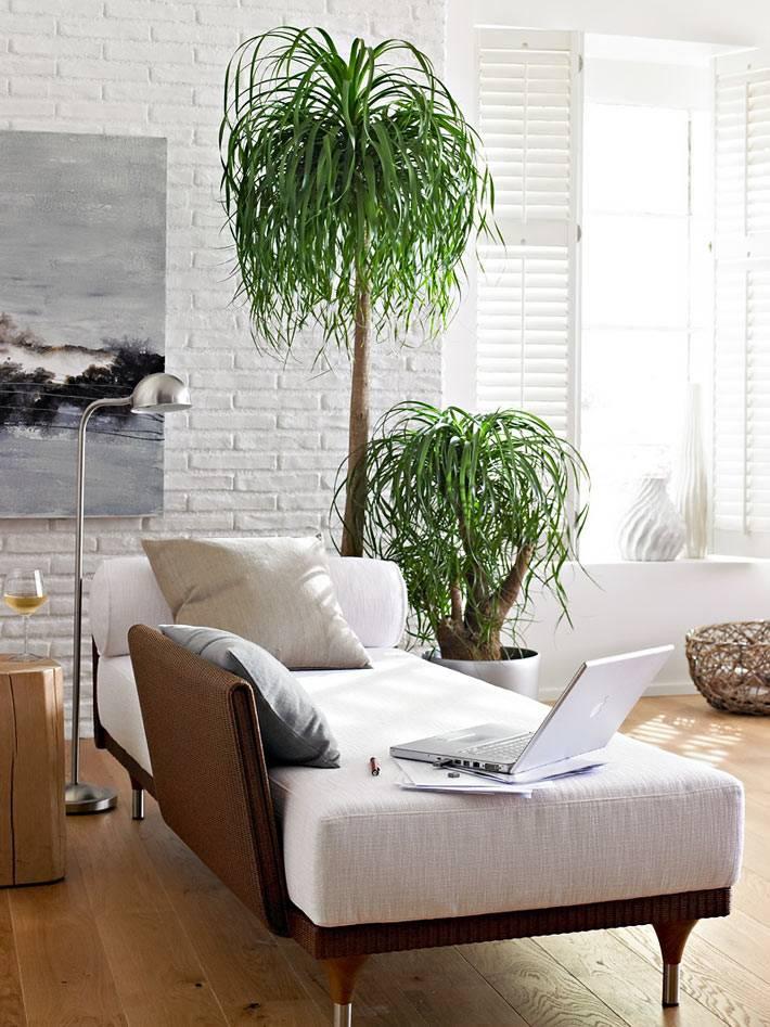 две комнатные пальмы возле белой козетки фото