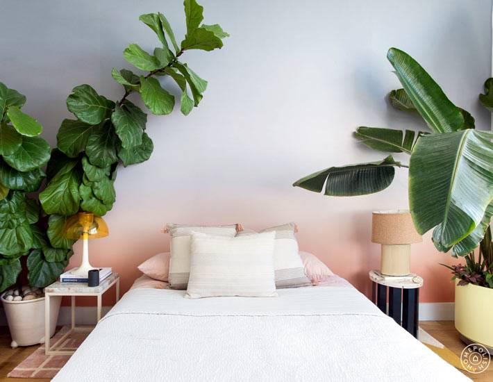 комнатные растения с большими листьями в интерьере спальни
