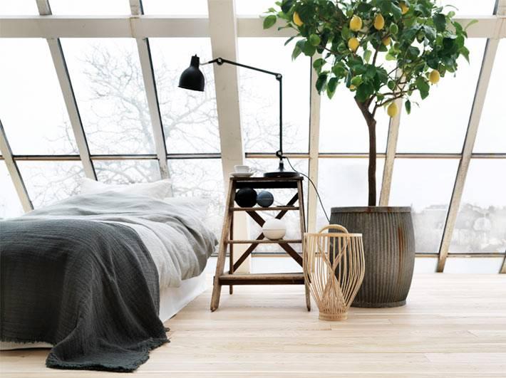 лимонное дерево в деревянной кадке на мансадном этаже дома