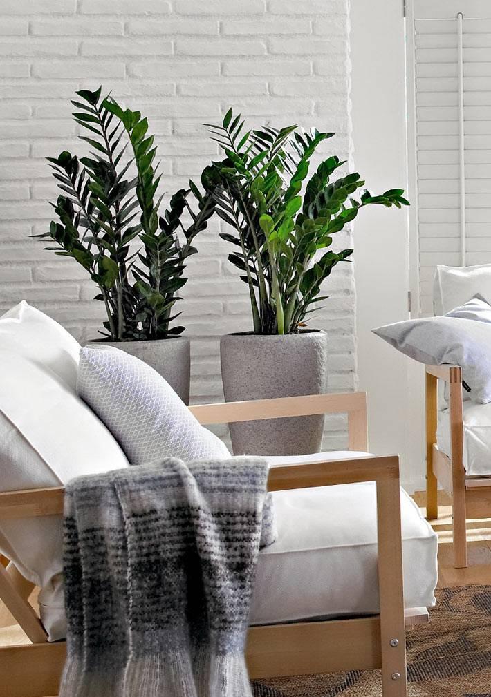 как выбрать комнатные растения для зимнего дома