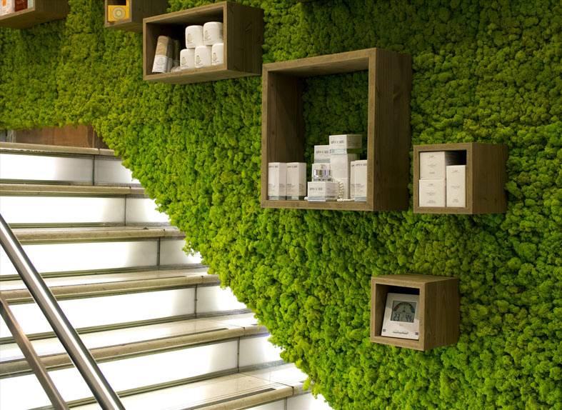зеленый мох в коридоре возле ступеней